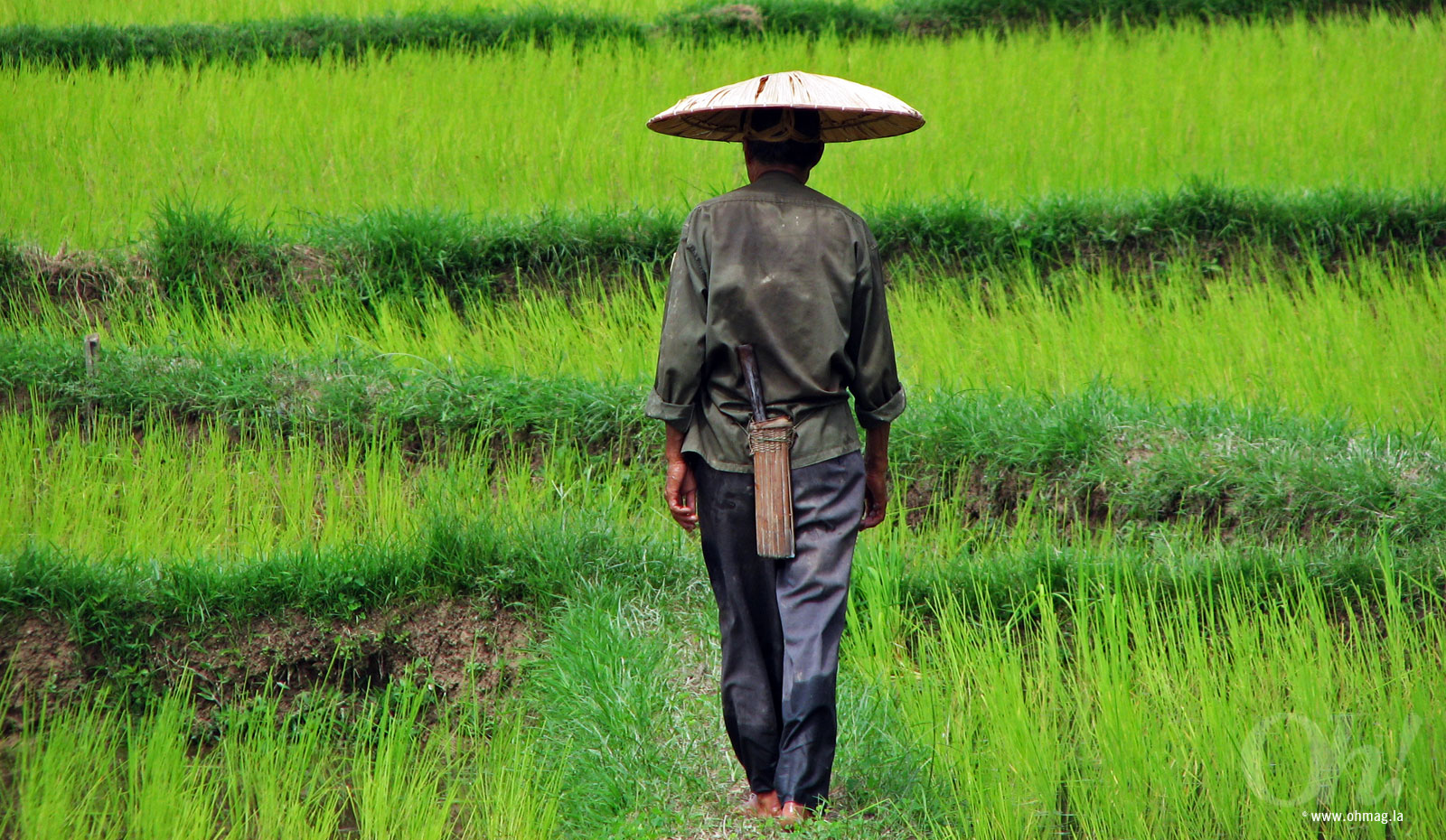 A farmer visiting her rice fields - Laos