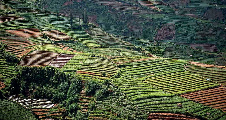 Trend of the Hills, Vietnam